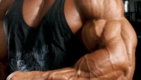 Add an Inch Program: Maintain Your Growth