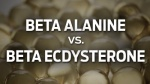 Beta Alanine vs. Beta Ecdysterone