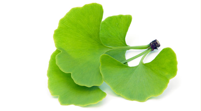 Muscle Up With Ginkgo Biloba
