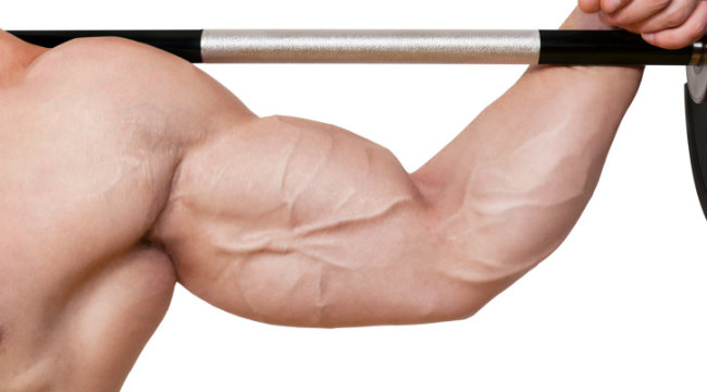 Weider Principles: Split Training to Build Muscle