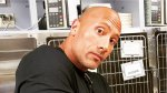 The Rock's Puppy Can't Escape Death a 2nd Time