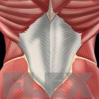 lower-back