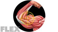 biceps-crosshairs