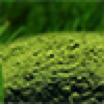 Green-Powder