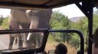 Elephant Charges Arnold Schwarzenegger's Safari Vehicle