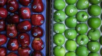 apples-1109
