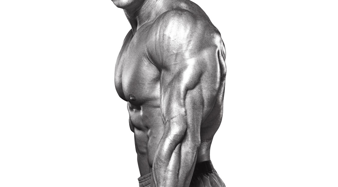 Muscular triceps