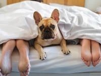 Dog and Couple in Bed