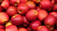 Top 10 Low-Carb Fall Fruits and Veggies