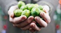 brussel-sprouts-for-T-136287905