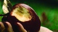 7-Demonized-BodyBuilding-Food-Apple