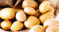 7-Demonized-BodyBuilding-Potatoes