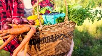 Woman-Holding-Vegetable-Basket