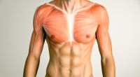 Anatomy-Pectoral-Muscles-Drawn-On-Chest